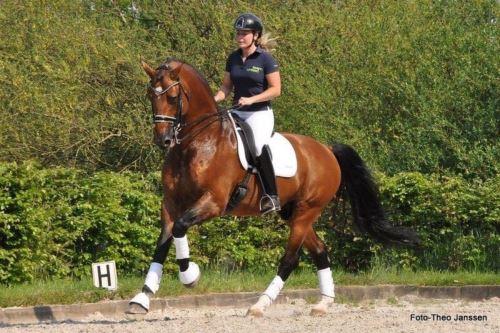 ZVONY pro koně (2 ks) - bílá